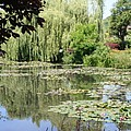 Lily Pond - Monets Garden - France by Christiane Schulze Art And Photography