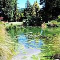 Lily Pond by Nancy Pauling