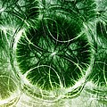 Lilypad - Fractal by Maria Urso