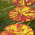 Lilypads by Christie Greiner-shelton