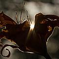 Lily's Light by Penny Meyers