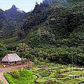 Limahuli Taro Fields In Kauai by Catherine Sherman