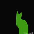 Lime Green Cat On Black Background by Barbara Griffin