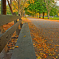 Lincoln Park Bench In Fall by Anthony Doudt