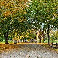 Lincoln Park In Fall by Anthony Doudt