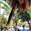 Lincoln Road In Miami Beach by Dora Sofia Caputo Photographic Design and Fine Art