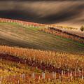 Line And Vine by Vlad Sokolovsky