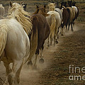 Line Of Mares by J L Woody Wooden