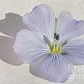 Linen Watercolour by John Edwards