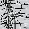 Lines And Birds by William Cauthern