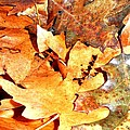 Lines Of Fall by Sue McElligott