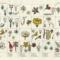 Linne's Plant System by Splendid Art Prints