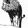 Lion 5x7 Card by Matthew Howard