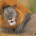 Lion At Rest by Olive Denyer