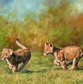 Lion Cubs Running by David Stribbling