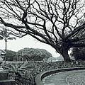 Lion Dog And Tree - Liliuokalani Park - Hawaii by Daniel Hagerman