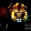Lion Eyes by Nick Gustafson