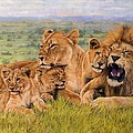 Lion Family by David Stribbling