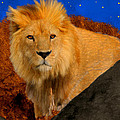 Lion In The Evening by Bruce Nutting