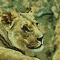 Lion Looking Back by Ernie Echols