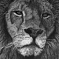 Lion Of Judah by Bobby Shaw