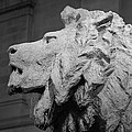 Lion Of The Art Institute Chicago B W by Steve Gadomski