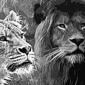 Lion Pair Black And White by Steve McKinzie
