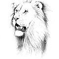 Lion Portrait by Michael Blanco