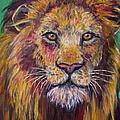Lion Stare by Kendall Kessler