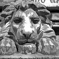 Lion Statue Guard by Indiana Zuckerman