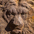 Lion Wall by Garry Gay