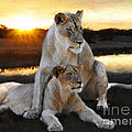 Lioness Protector by Constance Woods