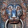 Lions Head Knocker by Antony McAulay