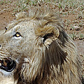 Lions Head by Tony Murtagh