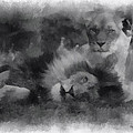 Lions Photo Art 01 by Thomas Woolworth