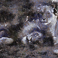 Lions Photo Art 02 by Thomas Woolworth
