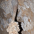 Lions Tail Carlsbad Caverns National Park by Fred Stearns