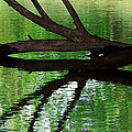 Liquid Reflection by Angela Wright