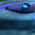 Liquid Saphire by Krissy Katsimbras