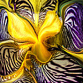 Liquified Orchid by Diana Powell