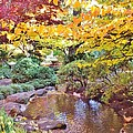 Lithia Park Ablaze With Fall Color by Cherie Cokeley