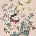 Lithosidae - Arctiidae by W Kirby