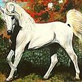 Little Arabian by Laura Wilson