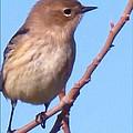 Little Bird by Eric  Schiabor