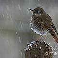 Little Bird Loving The Snow by Deborah A Andreas