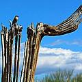 Little Bird On Tall Dead Saguaro by Barbara Zahno