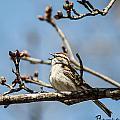 Little Bird Sings by Matt Steffen
