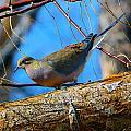 Little Birdie 2 by Brent Dolliver