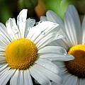 Little Bit Of Sunshine by Beata Obrzut