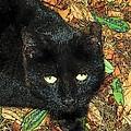 Little Black Cat In Fall by Deborah Montana
